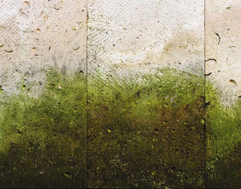 Beseitigung von grüner schimmel: Wie man grüner schimmel beseitigen kann