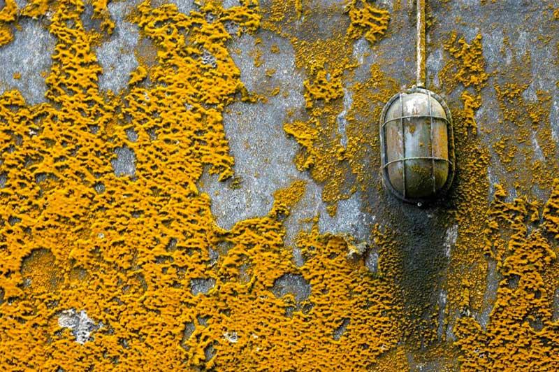 Gelber schimmel Wand