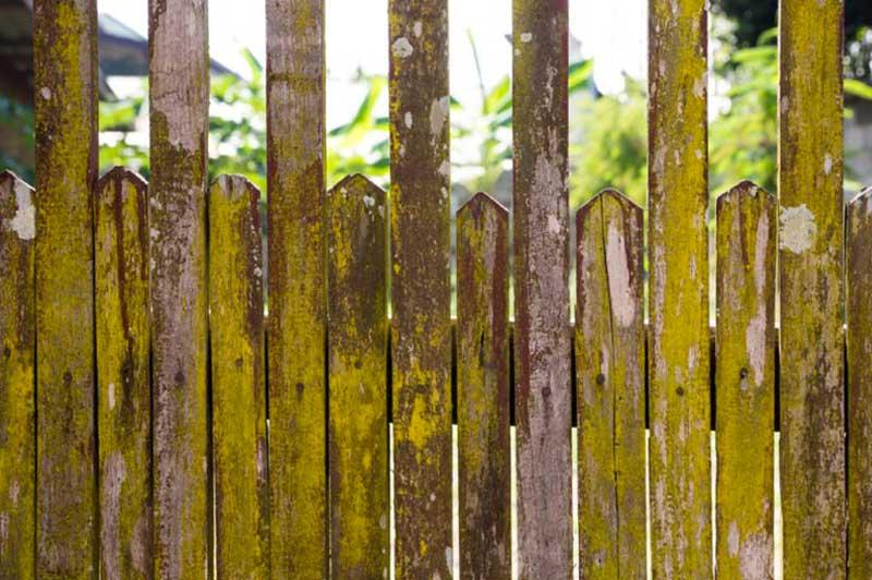 Gelber schimmel auf Holz