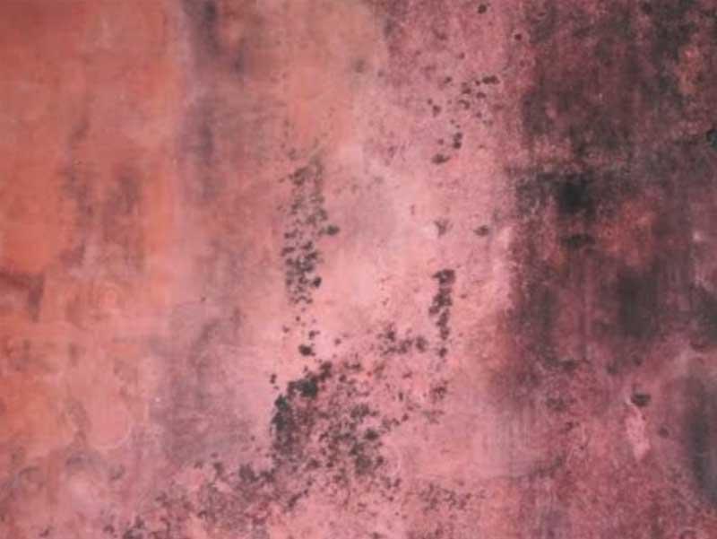 Roter Schimmel an der Wand
