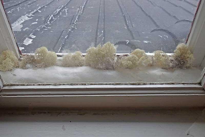 Schimmel am Fenster: Prävention und Entfernung
