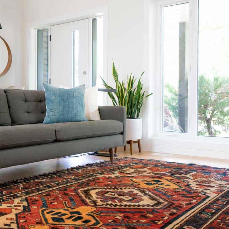Schimmel von Innenwände, Bodenbeläge und Teppiche