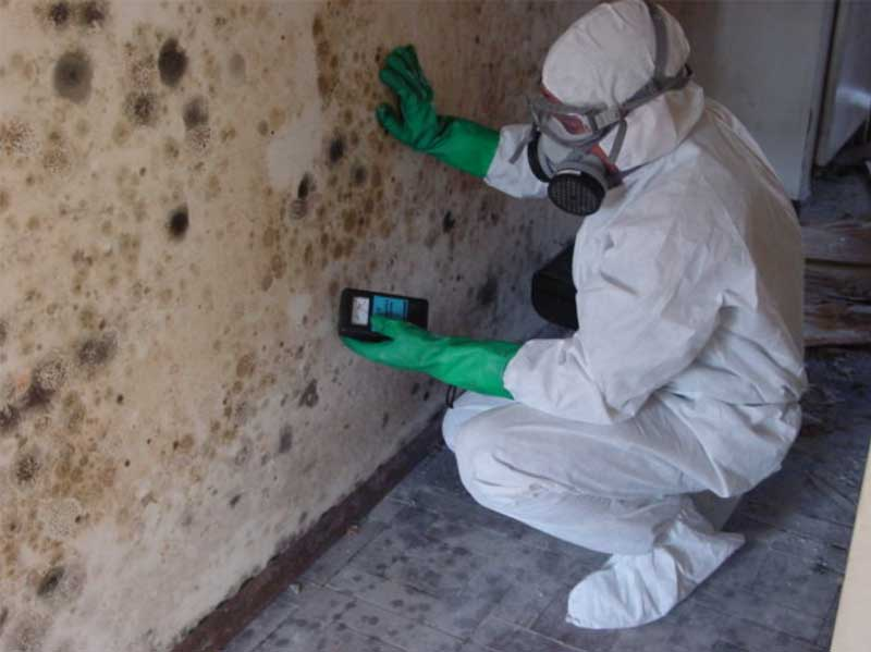 Schimmelpilze im Keller aus Wänden entfernen