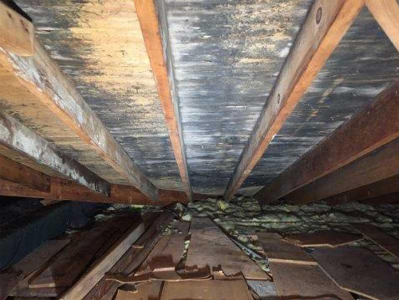 Weißer Schimmel auf Dachböden