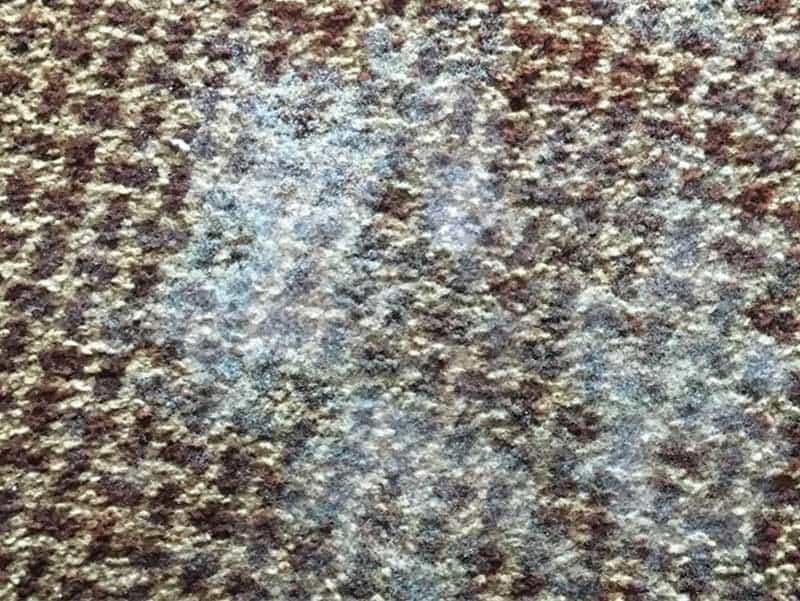 Weißer Schimmel auf Teppichen