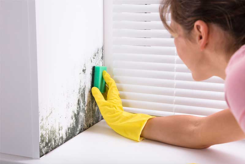 Wie man Schimmel von bemalten Wänden entfernt