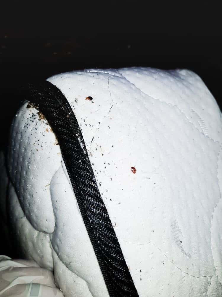 Bild von unverdauten Blutflecken von Bettwanzen auf der Matratze