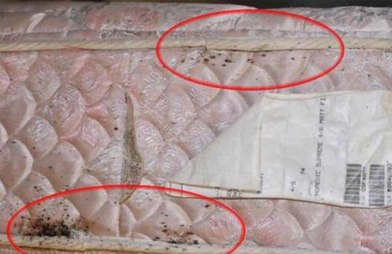 Verfahren zur Entsorgung von Matratzen mit Bettwanzenbefall