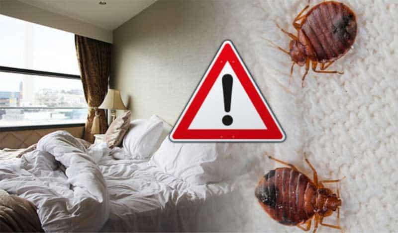 Werden Bettwanzen in Hotels gefunden