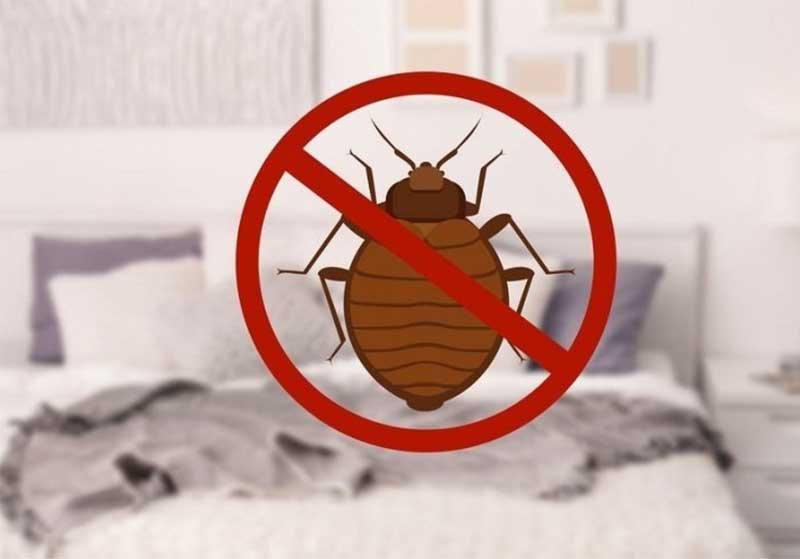 Wie man Bettwanzen in einer Matratze loswird