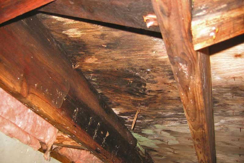 brauner Schimmel auf Holz
